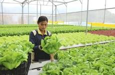 越南注重提升农产品质量安全 促进农业可持续发展