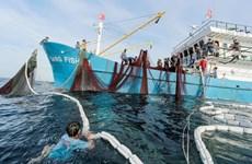 解除IUU黄牌警告:永久性撤销侵犯国外海域越南渔船的营业执照
