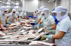 越南查鱼出口增长迅猛