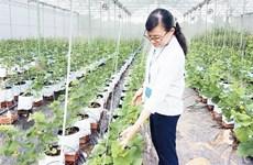 鼓励企业投资发展农业