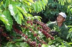 2018年越南咖啡出口创汇35亿美元