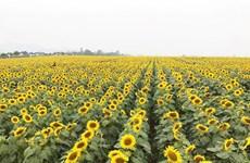 广平省注重发展农业旅游模式