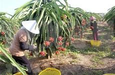 越南水果产品销售市场广阔