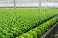 越南有机农产品出口前景广阔