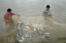 河南省水产养殖业的新发展方向