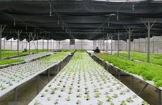 嘉莱省努力走向绿色经济