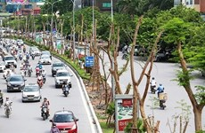 河内市力争2019年种植40万棵树