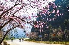 2019年河江省桃花节展现出岩石高原色彩