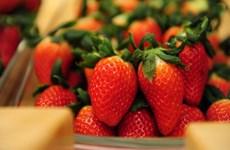 韩国征服东盟农产品市场