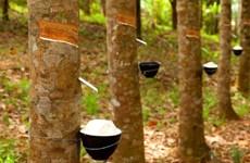 泰国、印尼和马来西亚削减橡胶出口规模