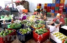 今年前两月蔬果出口额达5.84亿美元