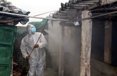 越南各地严查市场 抓好非洲猪瘟疫情防控工作
