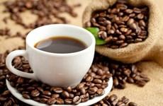 越南咖啡全球所占市场份额有待提高