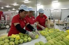 美国允许进口越南新鲜芒果