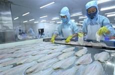 2019年越南努力保持查鱼出口增长态势