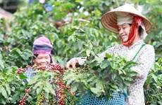 多措并举提升越南咖啡价值