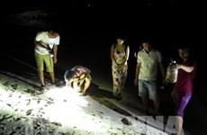 夜间捕蟹—李山岛的有趣旅游体验