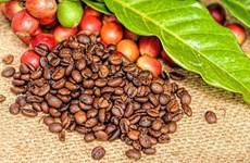 越南企业努力开拓速溶咖啡市场