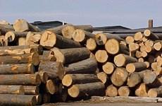 今年第一季度林产品出口额增长最高
