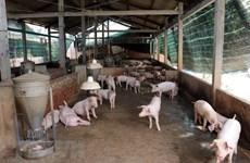 河内强化非洲猪瘟防控措施 河南海防疫情呈上升趋势