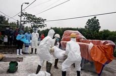 非洲猪瘟疫情仍在持续蔓延