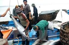 越南对中国金枪鱼出口突增
