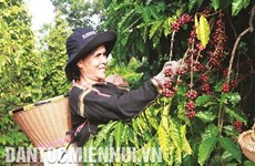 让西原咖啡产品走得更远