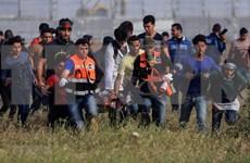 越南呼吁有关各方采取行动 避免加沙地带人道主义状况恶化