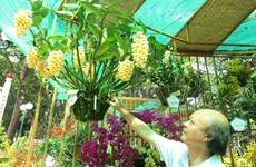 胡志明市努力推动兰花产业发展