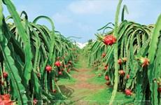 今年前4月主要农产品出口额下降5.6%