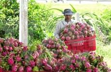 越南水果逐步征服苛刻市场