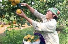 前江省充分挖掘庄园经济发展潜力
