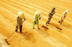 中国大米进口企业将赴越南九龙江三角洲各省进行实地考察