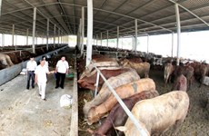 畜牧业急需变革转身 有效融入世界经济
