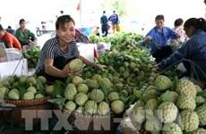 对中国市场出口农产品:机遇与挑战