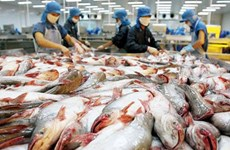 日本成为越南查鱼十大出口市场之一