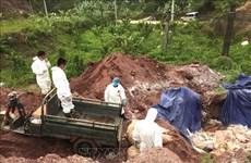 越共中央书记处就有效落实非洲猪瘟防控工作作出指示