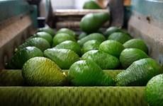 促进越南牛油果打入美国市场