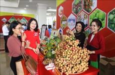 北江省举行荔枝生产和销售有关的经济论坛