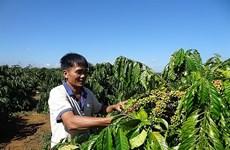 越南咖啡价格攀升
