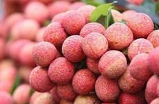越南荔枝出口市场占有率位居世界第二