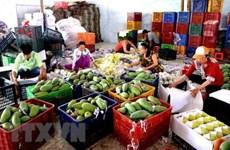 通过老街口岸的农产品出口量保持较好发展态势