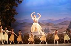 河内上演芭蕾舞剧《吉赛尔》庆祝俄罗斯国庆节
