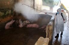 采取有力措施保障规模养猪场和种猪场生产安全