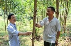 清化省协助农民发展林业经济