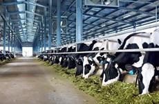 走在越南乳制品产业建设道路上的越南乳制品股份公司