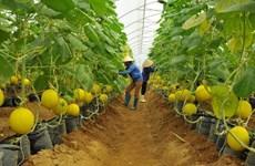 今年前6月胡志明市农业生产取得积极成果