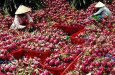 中国提高越南农产品技术壁垒