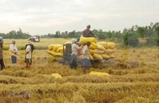 世界大米市场:印度、泰国和越南大米需求持续萎缩