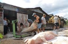 全力以赴做好非洲猪瘟疫情防控
